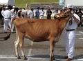 IMG_2284.JPG 畜産部のサムネイル画像