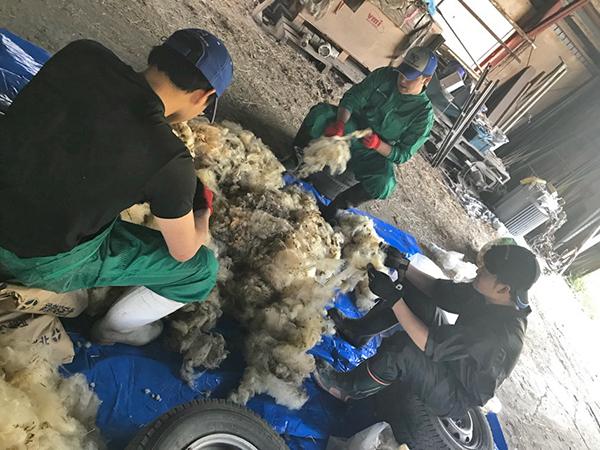 羊毛の洗浄