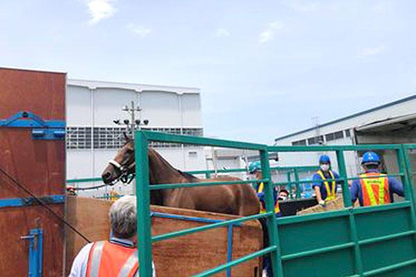 馬の輸入 1