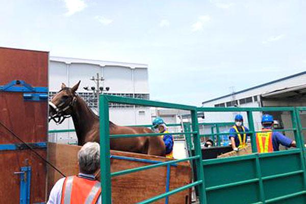 馬の輸入 2